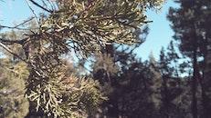 nature, tree