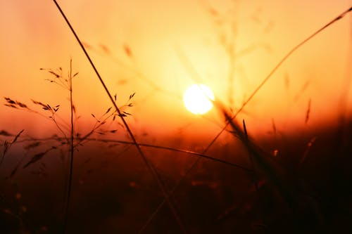 Foto De Enfoque Selectivo De Plantas Durante La Puesta De Sol