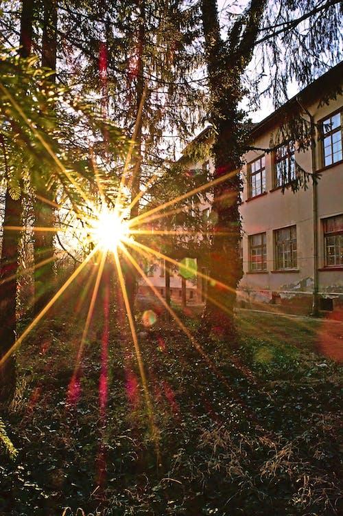 Gratis stockfoto met gouden uur, Lensflare, zonnestralen, zonsondergang