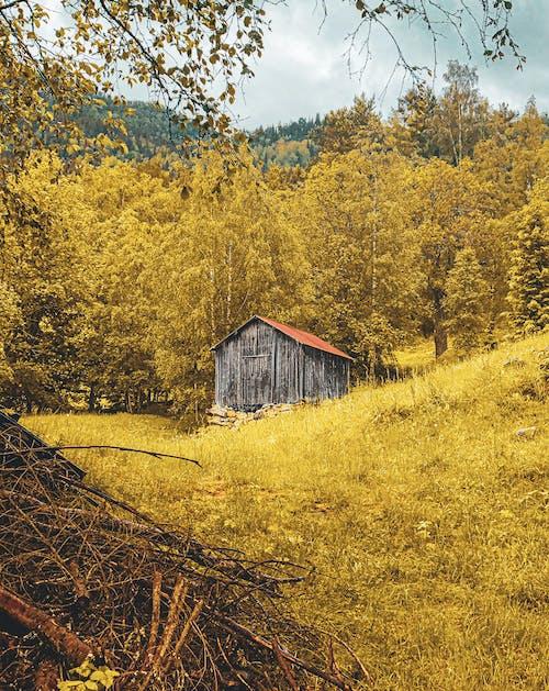 Δωρεάν στοκ φωτογραφιών με αγροτικός, δασικός, δέντρα, εξοχή