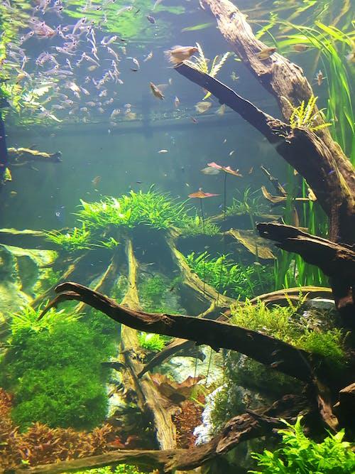 Free stock photo of aquatic, aquatic animal, artificial reef