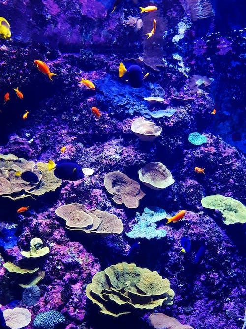 Free stock photo of aqua, aquatic, aquatic animal