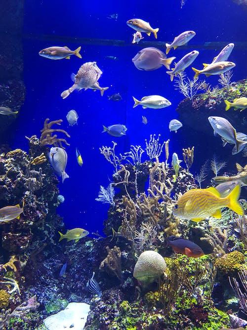Imagine de stoc gratuită din acvatic, adâncul mării, albastru, animal acvatic