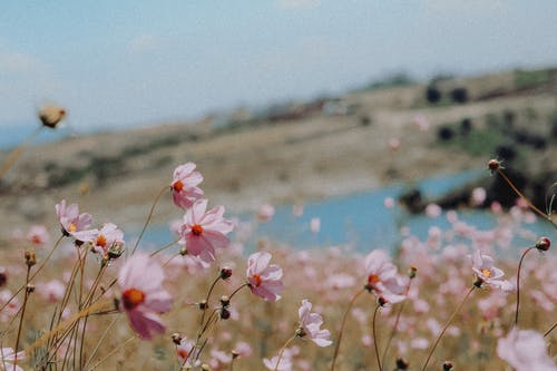 Fotobanka sbezplatnými fotkami na tému 4k tapety, bokeh, detailný záber, flóra
