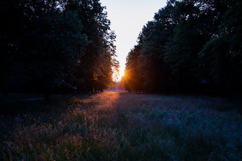 喜怒無常, 大自然, 寧靜的景觀, 日落 的 免费素材照片