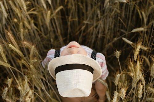 Ảnh lưu trữ miễn phí về cánh đồng lúa mì, đất nông nghiệp, đất trồng trọt, độ sâu trường ảnh