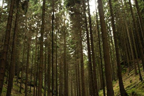 Ingyenes stockfotó alacsony szögű felvétel, erdő, fák, környezet témában