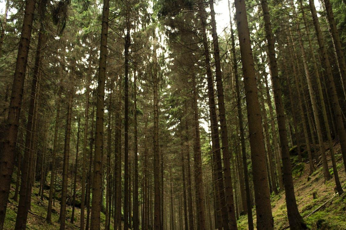alacsony szögű felvétel, erdő, fák