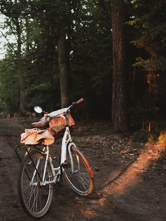 arbres, bicyclette, garé
