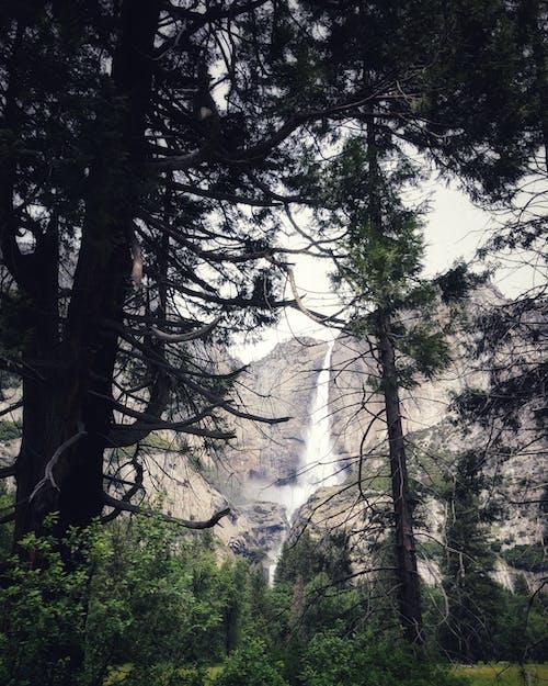 Foto stok gratis alam, alam liar, cabang, cabang pohon