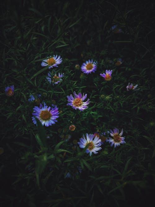 Fotobanka sbezplatnými fotkami na tému detailný záber, flóra, HD tapeta, hĺbka ostrosti