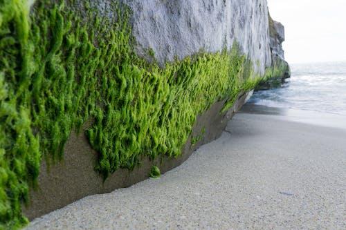 Free stock photo of beach, brown, green, grey