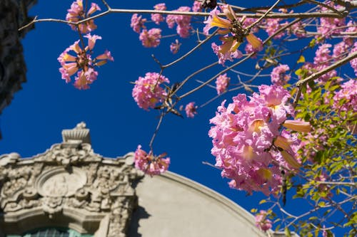 Free stock photo of architecture, blue, church, flower