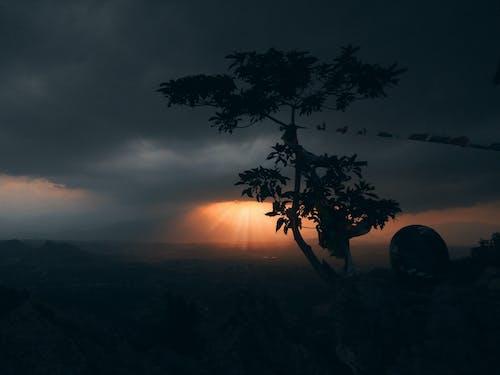 單樹, 黑暗的傍晚陽光 的 免費圖庫相片