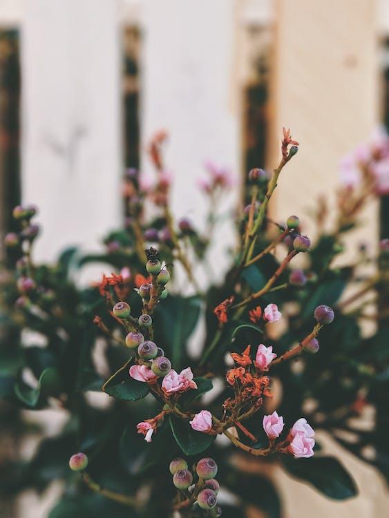beauté, bourgeons, boutons