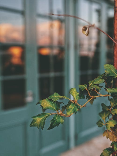 Fotobanka sbezplatnými fotkami na tému rastlina, selektívne zaostrenie, vetva, zelené listy