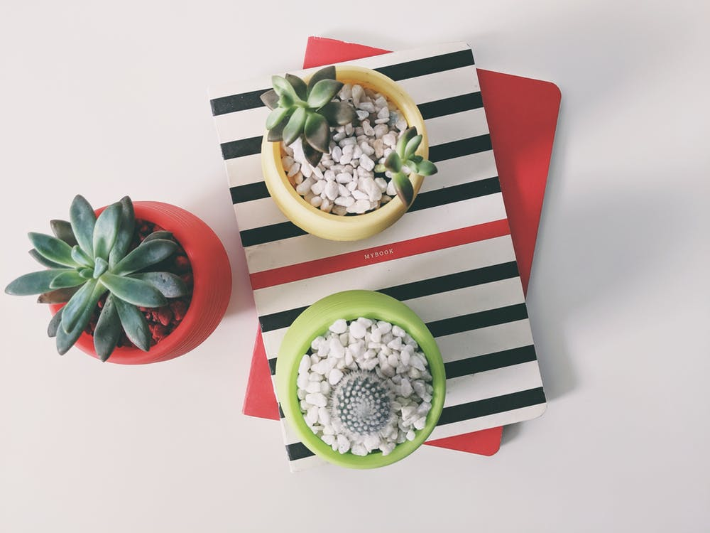 Top View Photography of Three Succulent Plants