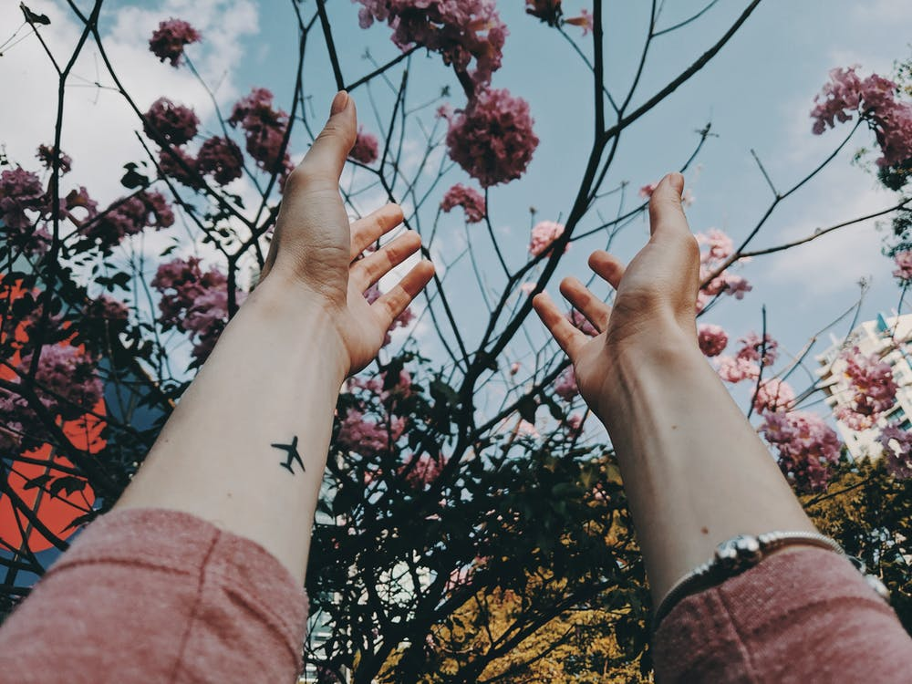 Photo of a Person's Hand About to Touch Pink Cherry Blossoms