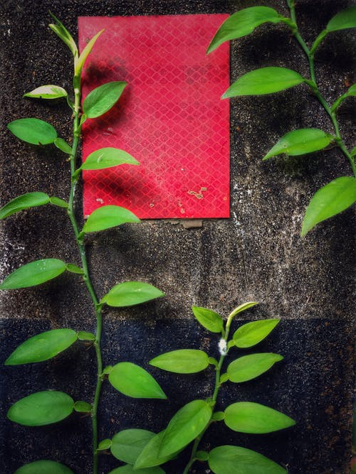 Gratis lagerfoto af grønne blade, mile sten, natur, reflektor