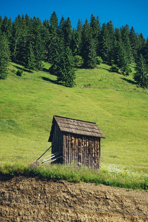 Photo of Brown Wooden Shed Near Trees