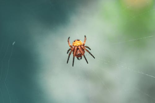 Macro Photography of a Brown Spider on Web