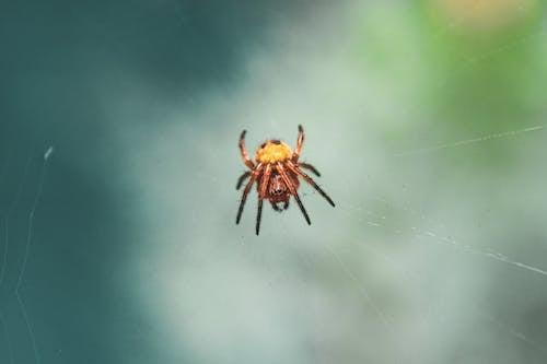 거미, 거미류, 거미줄, 곤충의 무료 스톡 사진