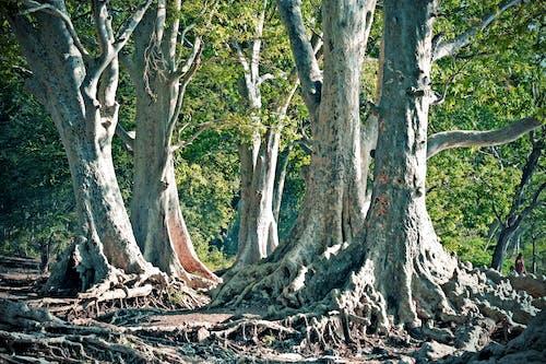 Ilmainen kuvapankkikuva tunnisteilla haukkuminen, juuret, puun oksat, puunrungot