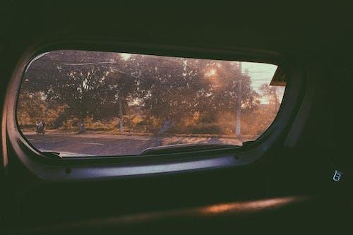 Foto profissional grátis de árvores, automóvel, copo, janela