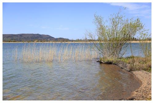 Gratis arkivbilde med innsjø