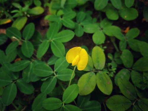 Gratis lagerfoto af blomst, grøn baggrund, gul blomst, gul i grøn