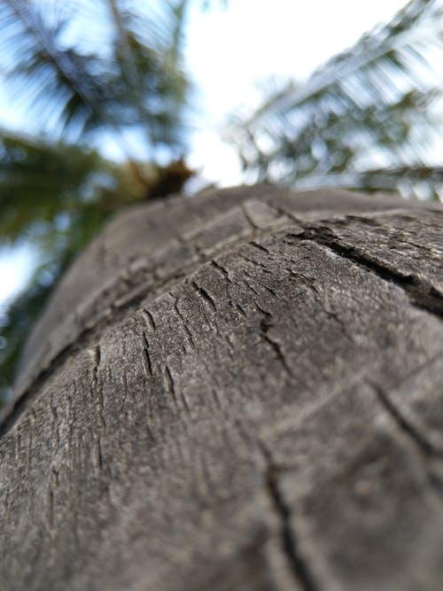 ココナッツの木の無料の写真素材