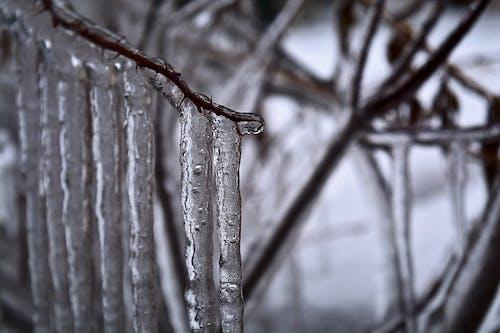 Gratis stockfoto met ijs, ijspegels, sneeuw