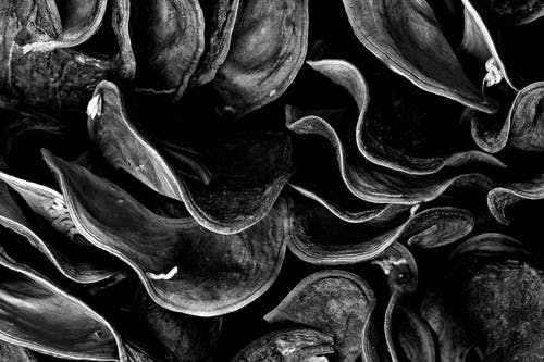 Free stock photo of abstract, black, black and white