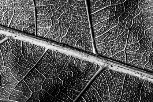 Grayscale Close-up Photo of Leaf Veins