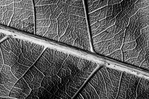 Foto profissional grátis de close, estrutura, folha, macro