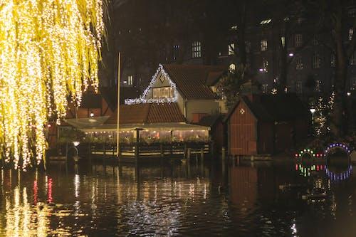 Illuminated Christmas Tree at Night during Winter