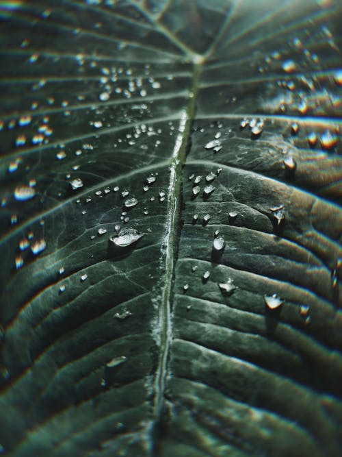 Close-up Photo of Green Leaf With Water Drops
