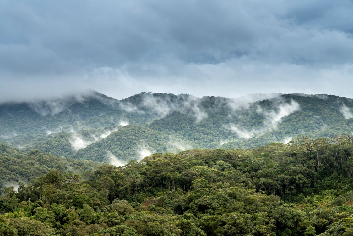 Kostenloses Stock Foto zu bäume, berg, bewölkt