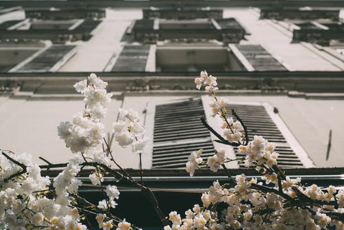 Gratis stockfoto met architectuur, bloem, buitenkant van het gebouw, fotografie met lage hoek