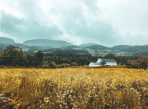 Foto profissional grátis de cabana de madeira, cores do outono, fotografia da natureza, montanha