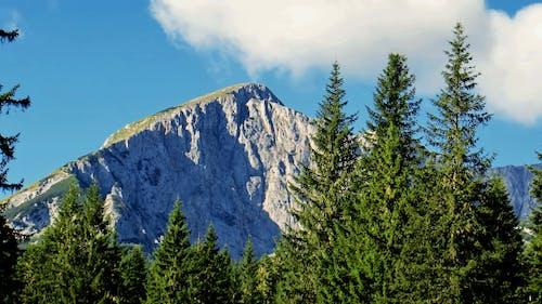 Gratis arkivbilde med blå himmel, fjelltopp, fjellutsikt, furutre