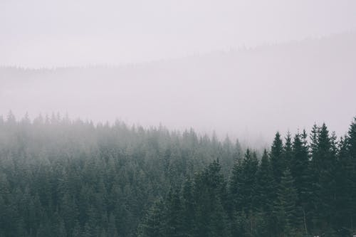 Free stock photo of adventure, fog, forest, green