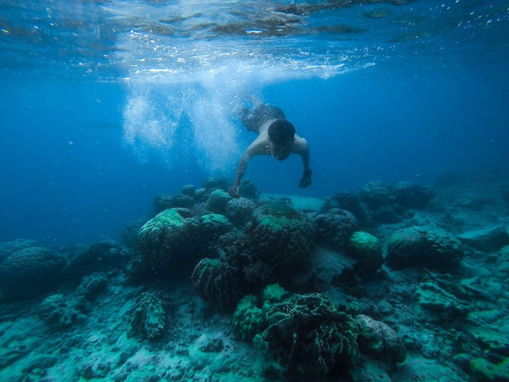 arrecife, aventura, azul
