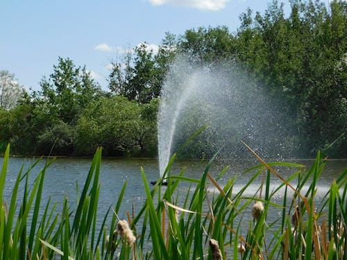 Imagine de stoc gratuită din fotografie cu natură