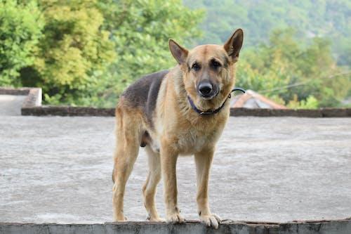 Free stock photo of dog