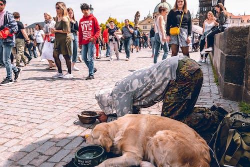 Dog and Man on Brick Walkway