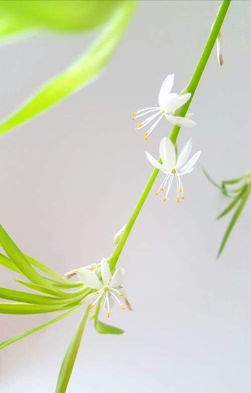 宏觀, 微妙, 明亮, 植物群 的 免費圖庫相片