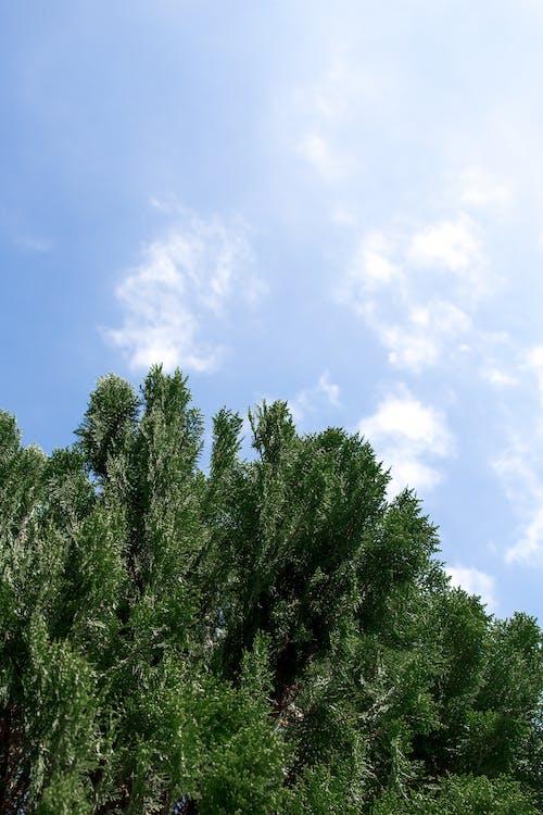 경치, 경치가 좋은, 구름, 나뭇잎의 무료 스톡 사진