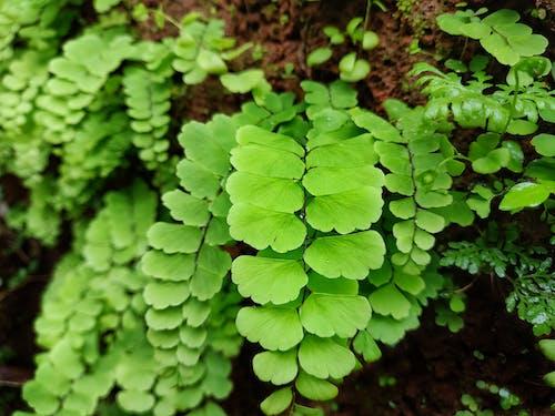 Gratis lagerfoto af blade, efter regn, grøn, grønlig