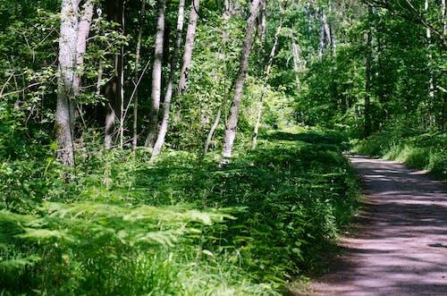 Imagine de stoc gratuită din arbori, cale, centrale, codru